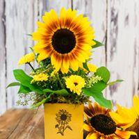 Tillamook Florist Sunflower Flats