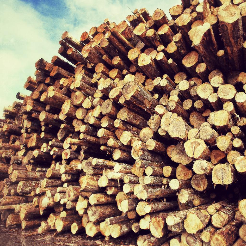 Tillamook Lumber Company Distribution Manufacturing
